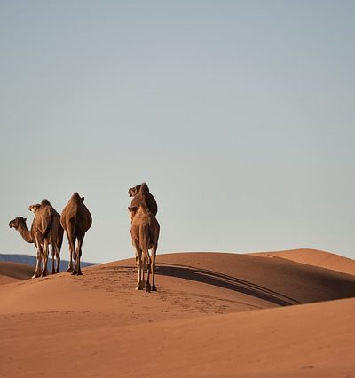 desert 4134934 150 400x426 - MOROCCO TRAVEL TIPS AND UPDATES