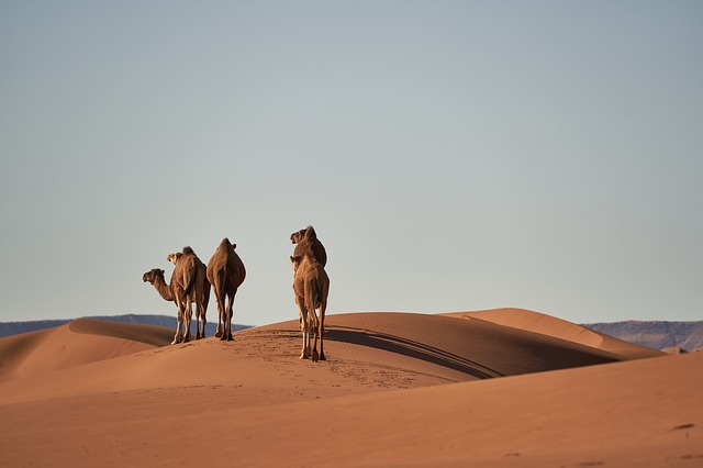 desert 4134934 150 - A Quick Guide To Morocco